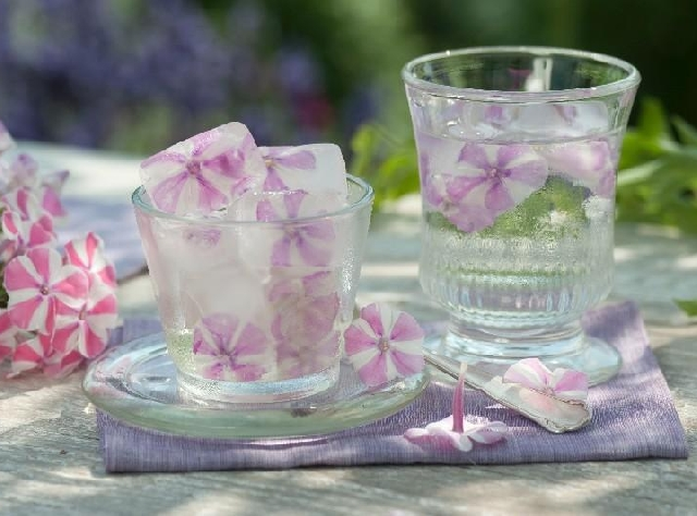 Summer cold and hot Drinks with Fruits, Herbs and Flowers