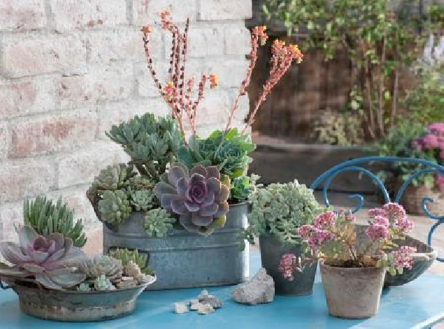 Succulents on the balcony and terrace